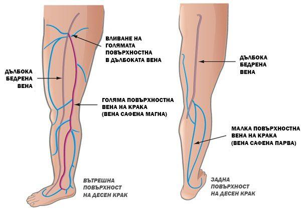 Повърхностни и дълбоки вени на крака