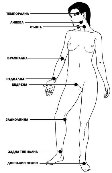 Места за измерване на пулса
