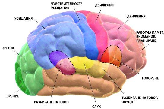 Региони на мозъчната кора и симптоми на инсулт.